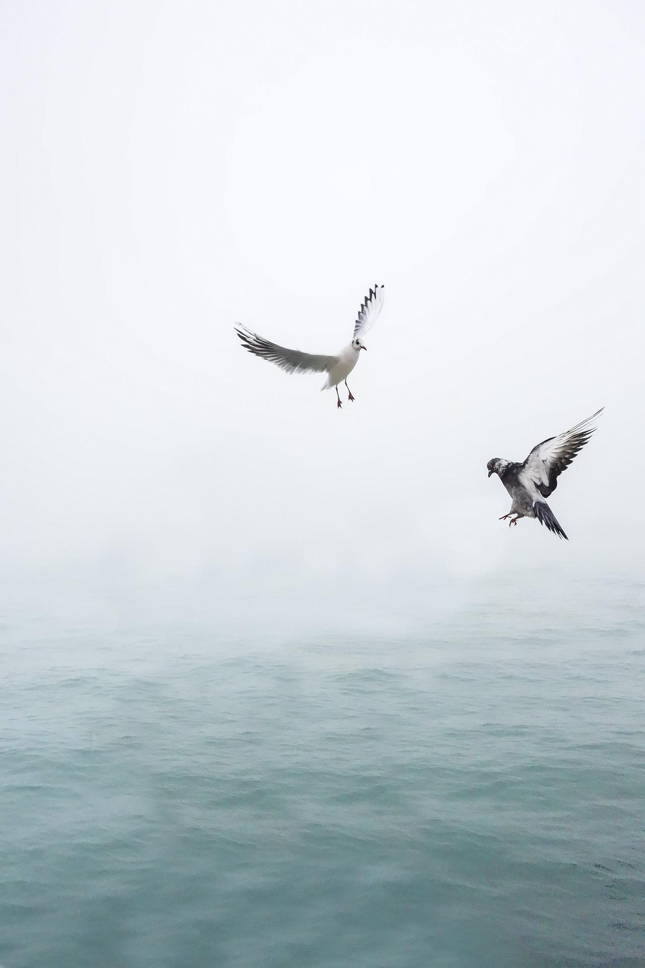 gull-1635699_1920